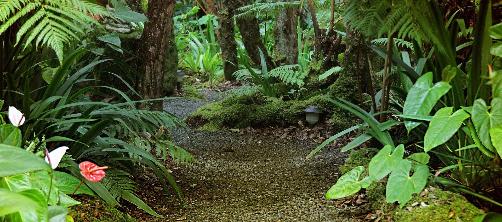 Volcano-Hawaii-rainforest-path