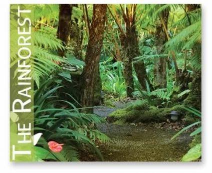 Home - The Rainforest